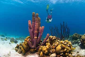 snorkelen 2.jpg